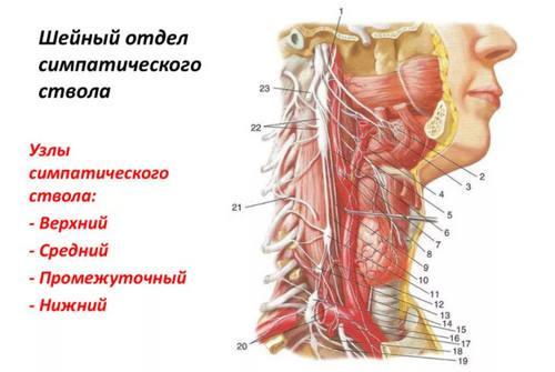 Ганглионит шейных узлов