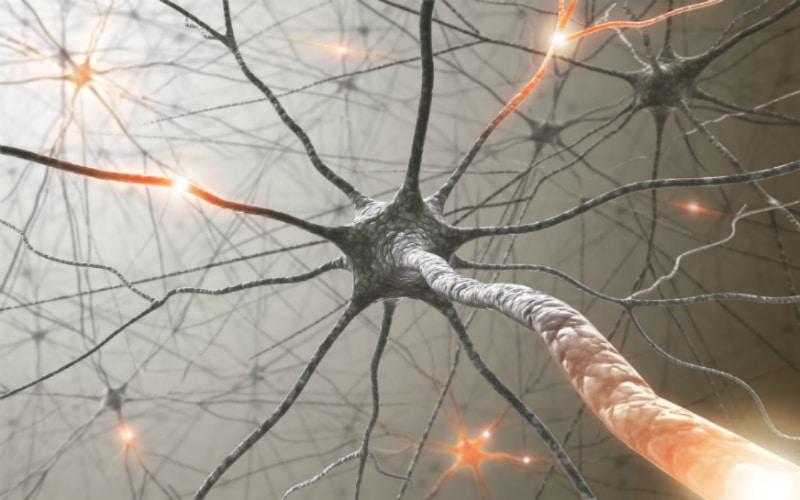 Нервные волокна